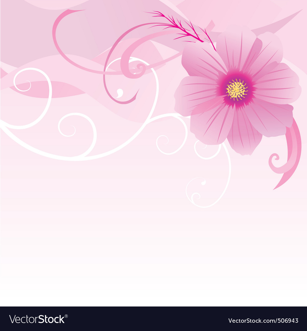 Vector illustration of cosmos flower vector image