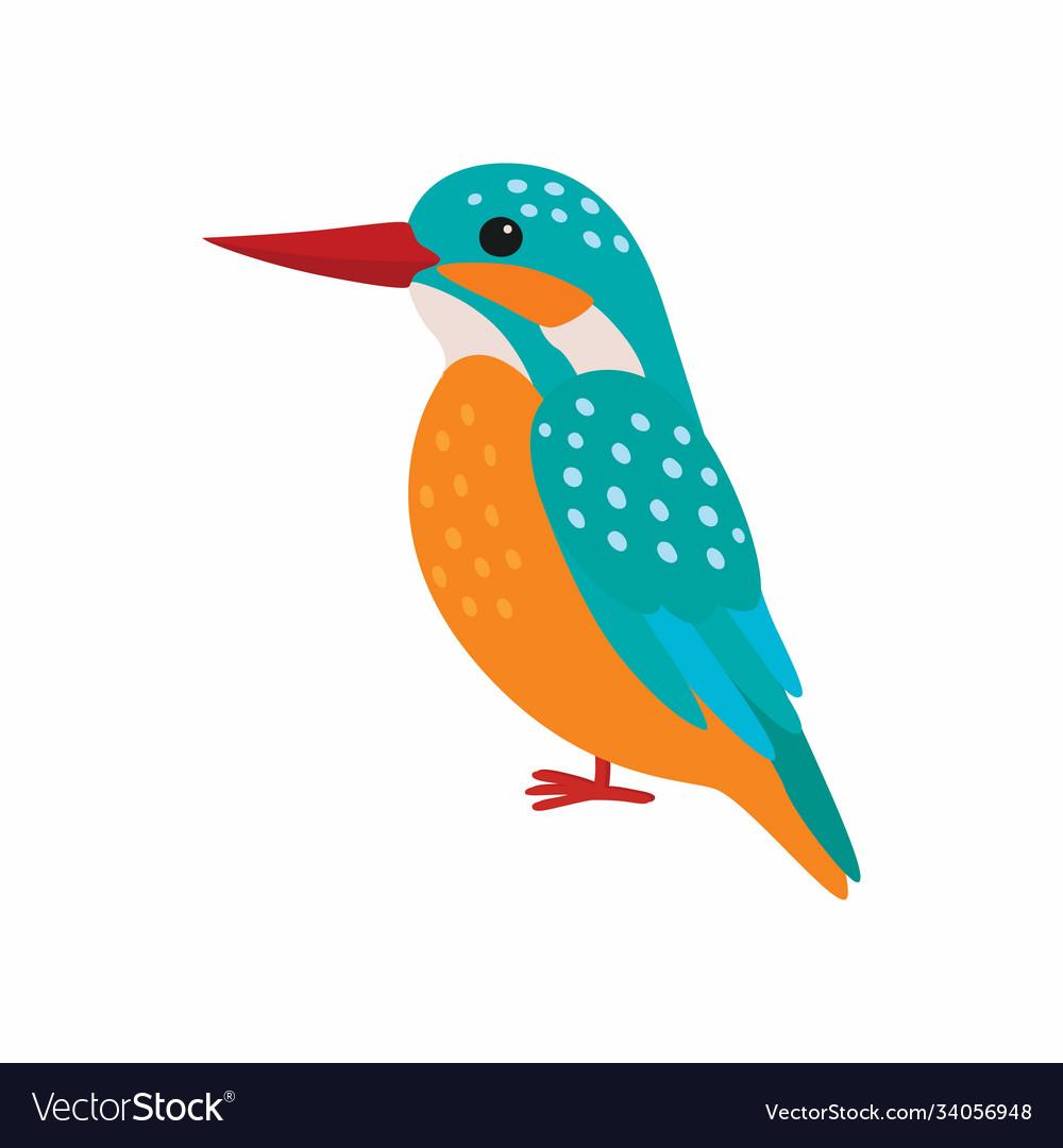Kingfisher predatory birds wildlife