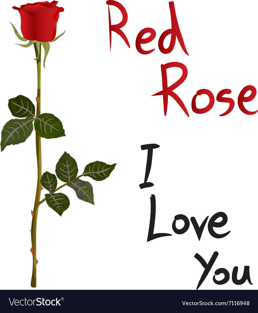 Red Rose Meaning