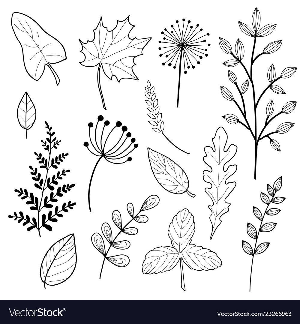 Set of botany sketches and line doodles