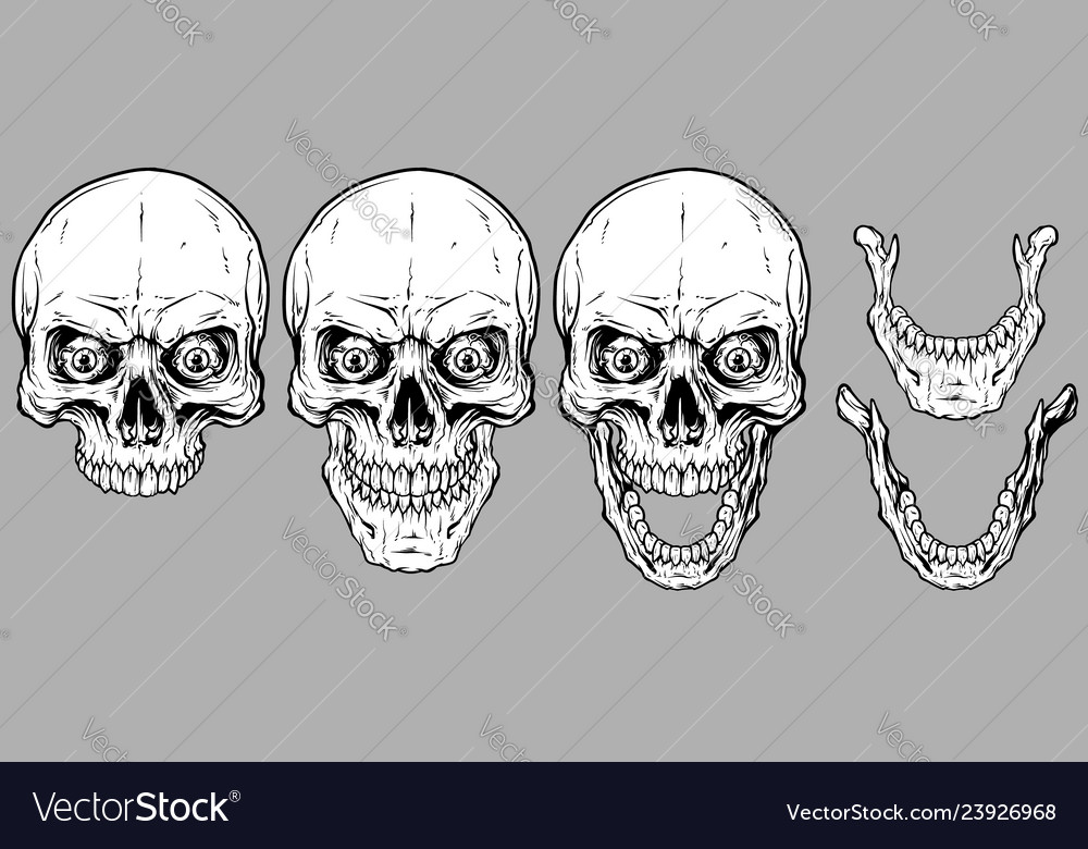 Detailed graphic white human skulls and jaws set