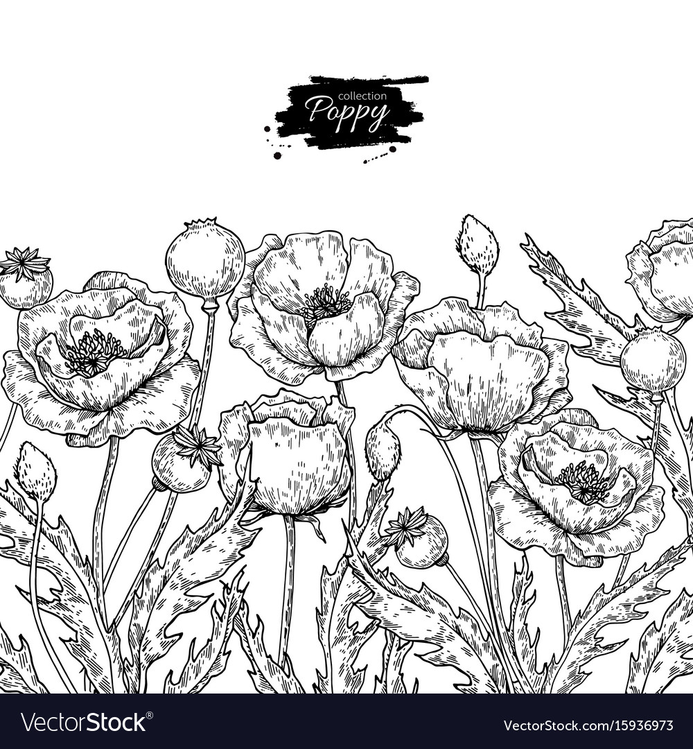 Poppy flower drawing set isolated wild royalty free vector poppy flower drawing set isolated wild vector image mightylinksfo