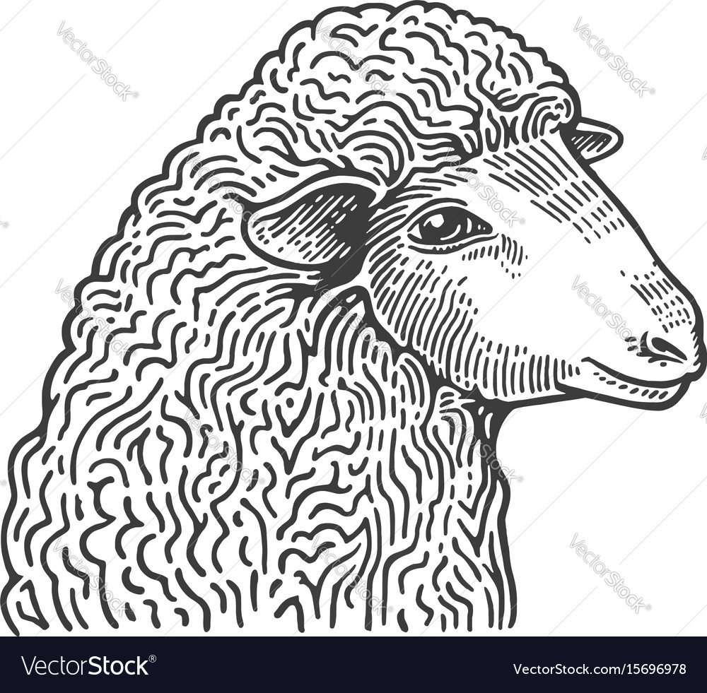 Head of sheep hand drawn in style of medieval