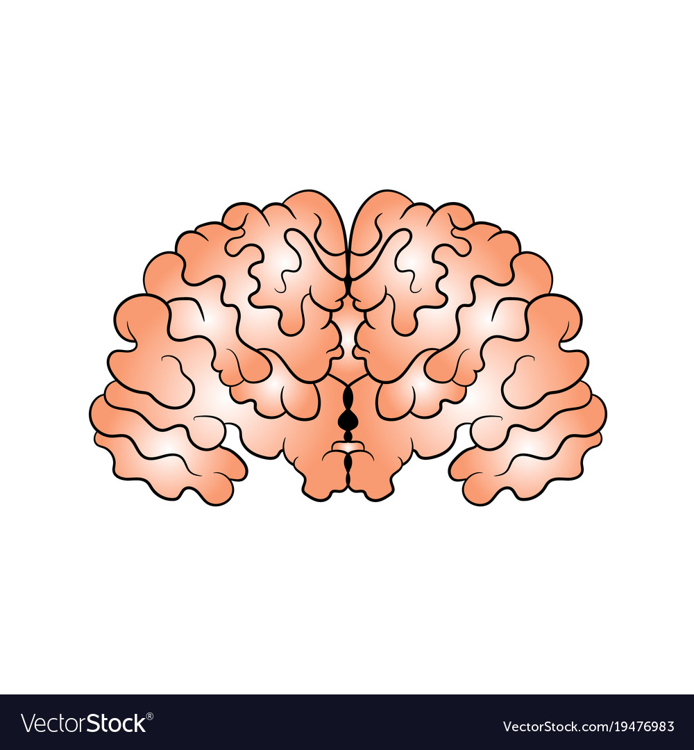 Picture of the brain drawn by hand