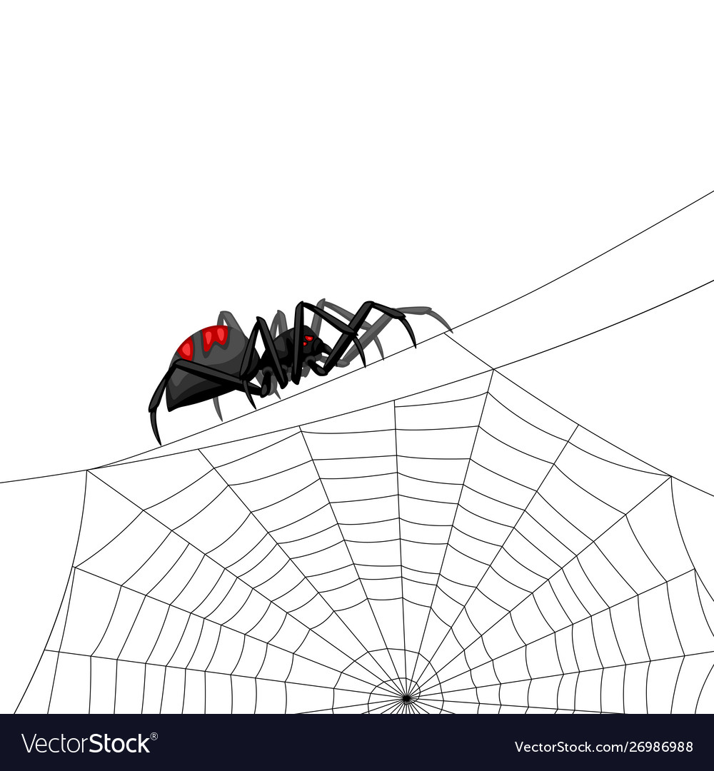Background With Black Widow Spider