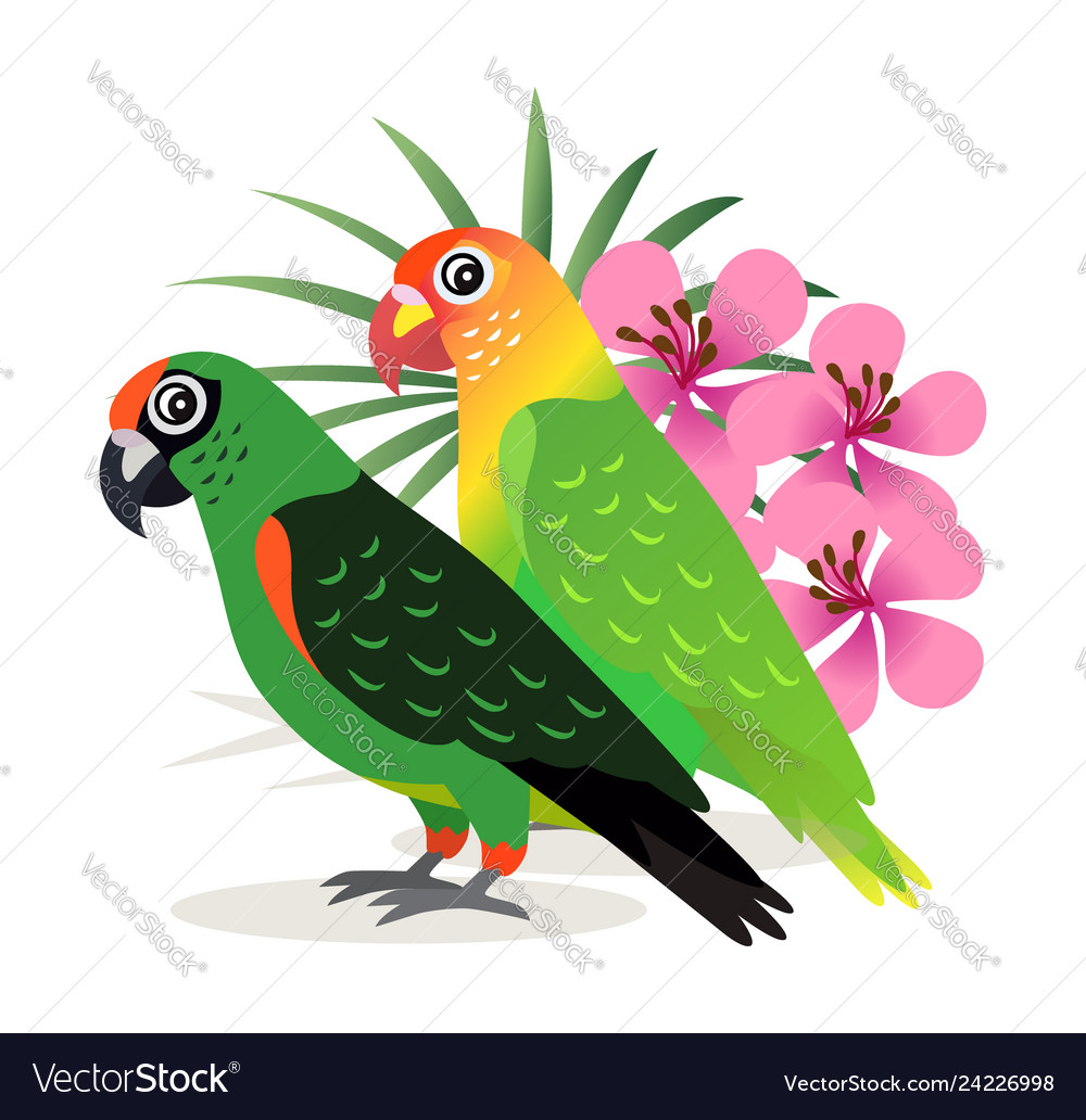 Two beautiful colorful parrots lovebird with pink