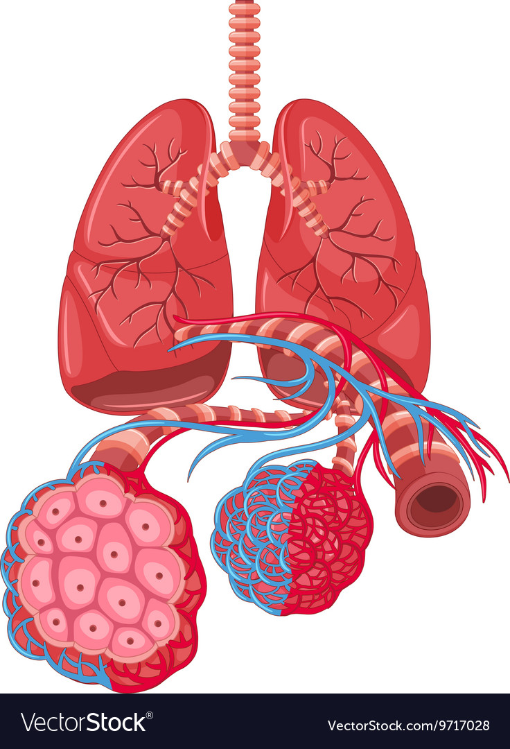 lung cancer in humans and the rat It is thought to be a leading cause of lung cancer a research team investigates this theory they gather large amounts of data on basement radon concentrations and lung cancer rates and conclude that the more radon there is, the more likely is lung cancer.