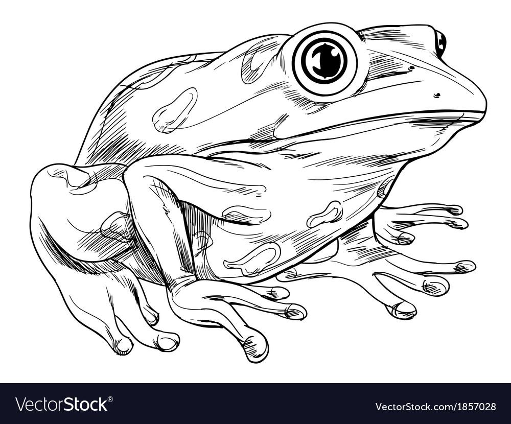 frog outline royalty free vector image vectorstock rh vectorstock com Frog Clip Art Black and White Super Frog Vector