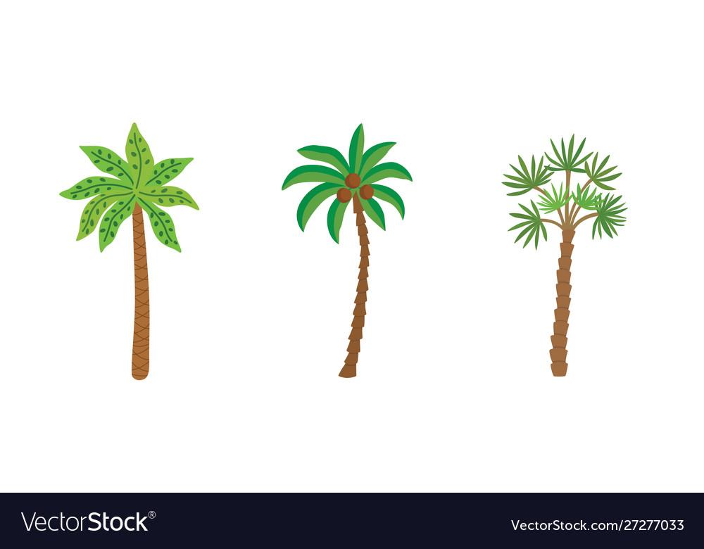 Palm trees isolated on white background beautiful