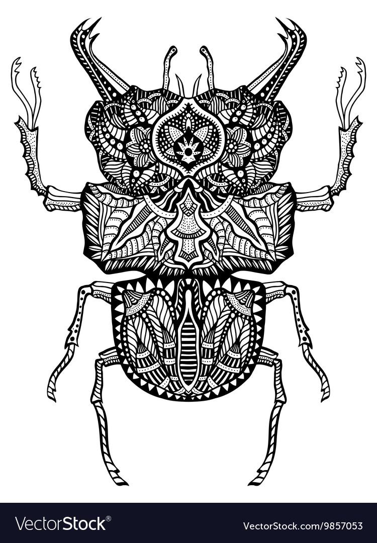 Hand drawn beetle vector image