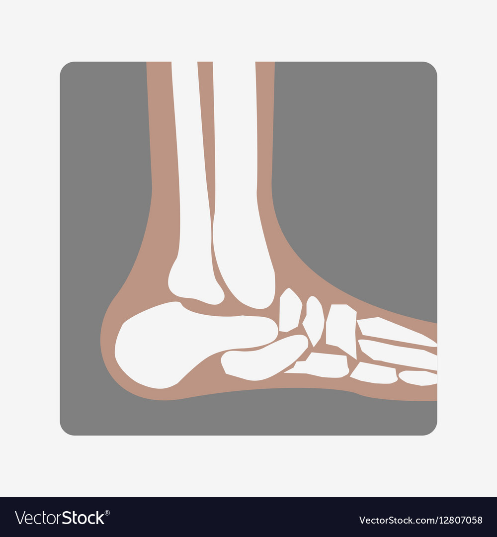 Foot Bones joint vector image