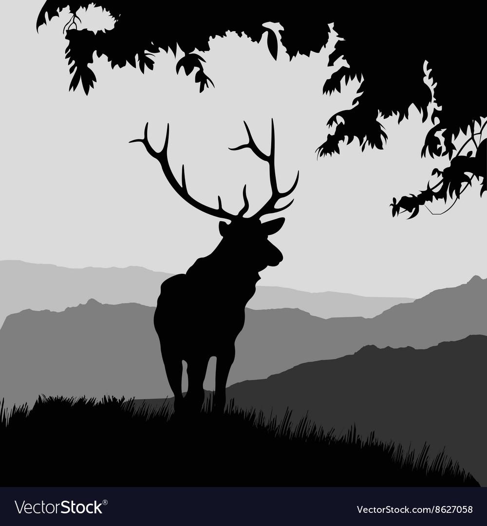 Monotonic of an elk