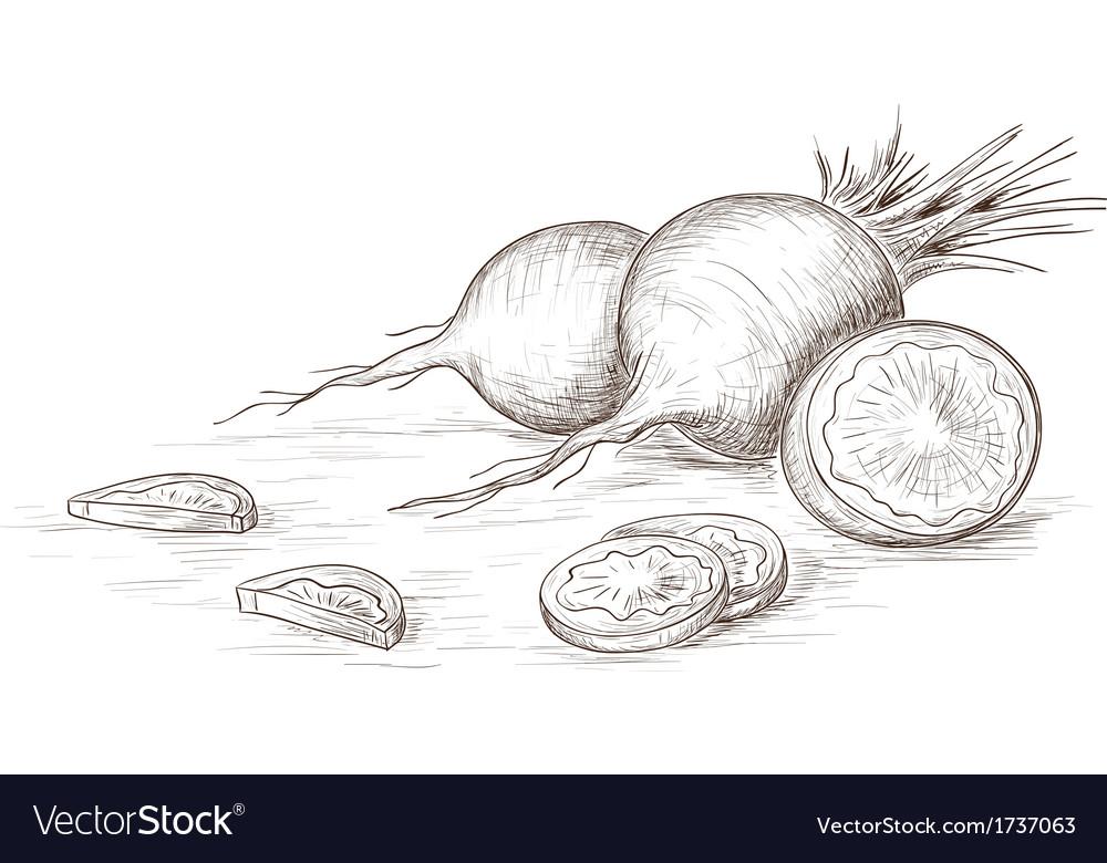Hand drawn radish