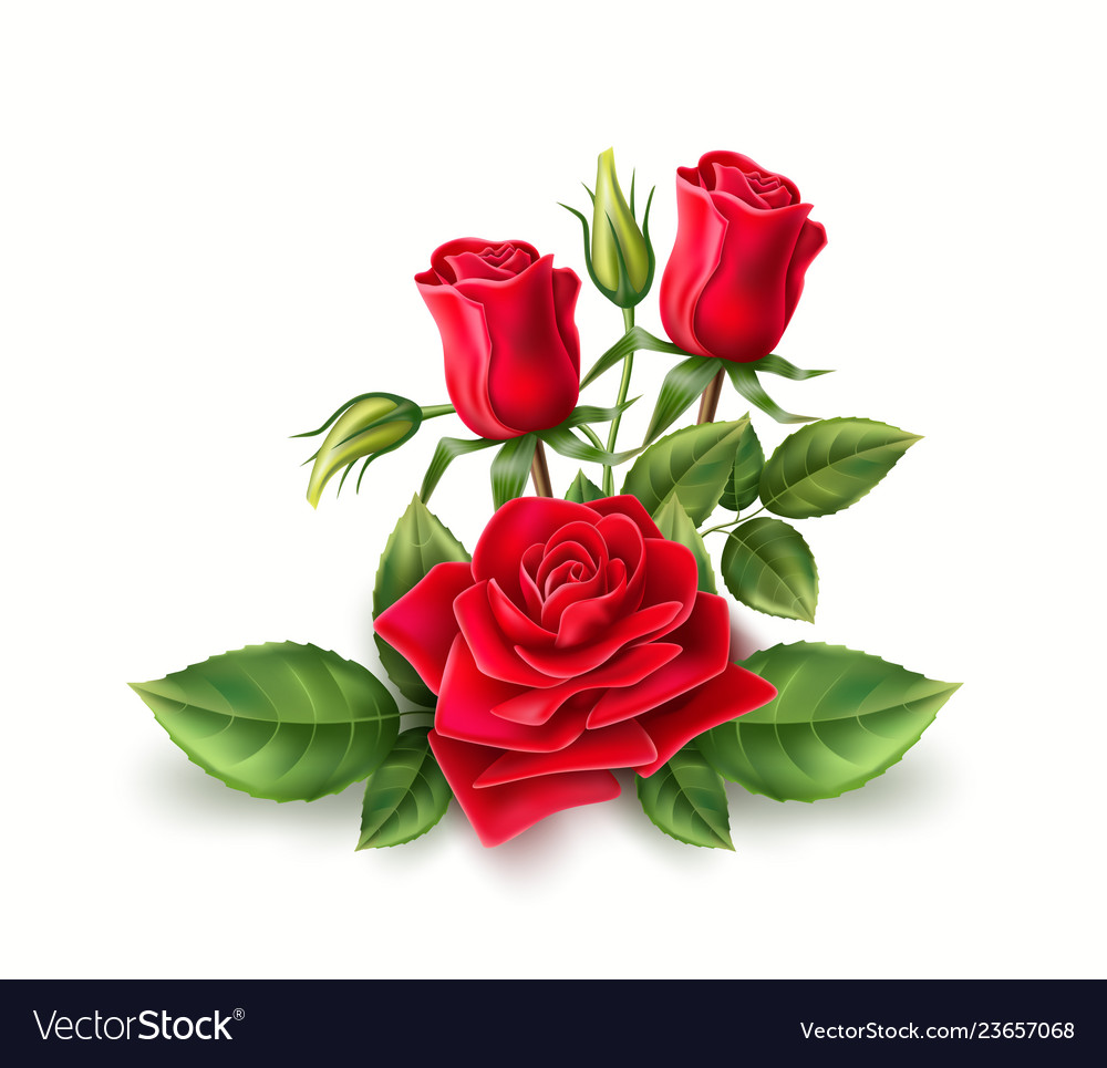 3d Realistic Red Rose Elegant Bouquet Royalty Free Vector