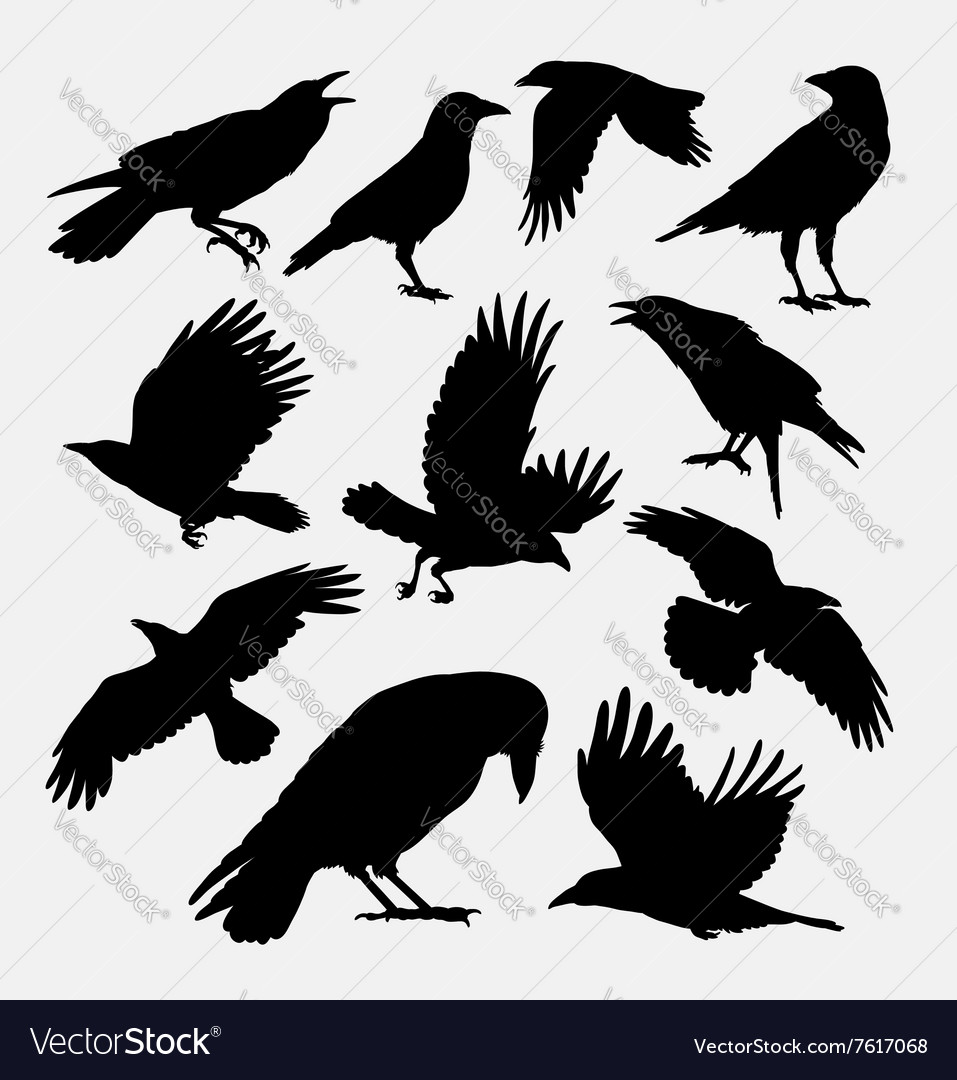 Crow bird poultry animal silhouette vector image