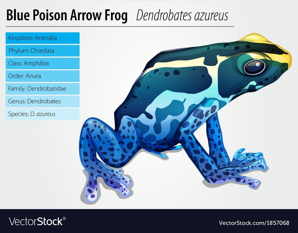poison dart frog royalty free vector image vectorstock rh vectorstock com Black Poison and Green Dart Frog Black Poison and Green Dart Frog