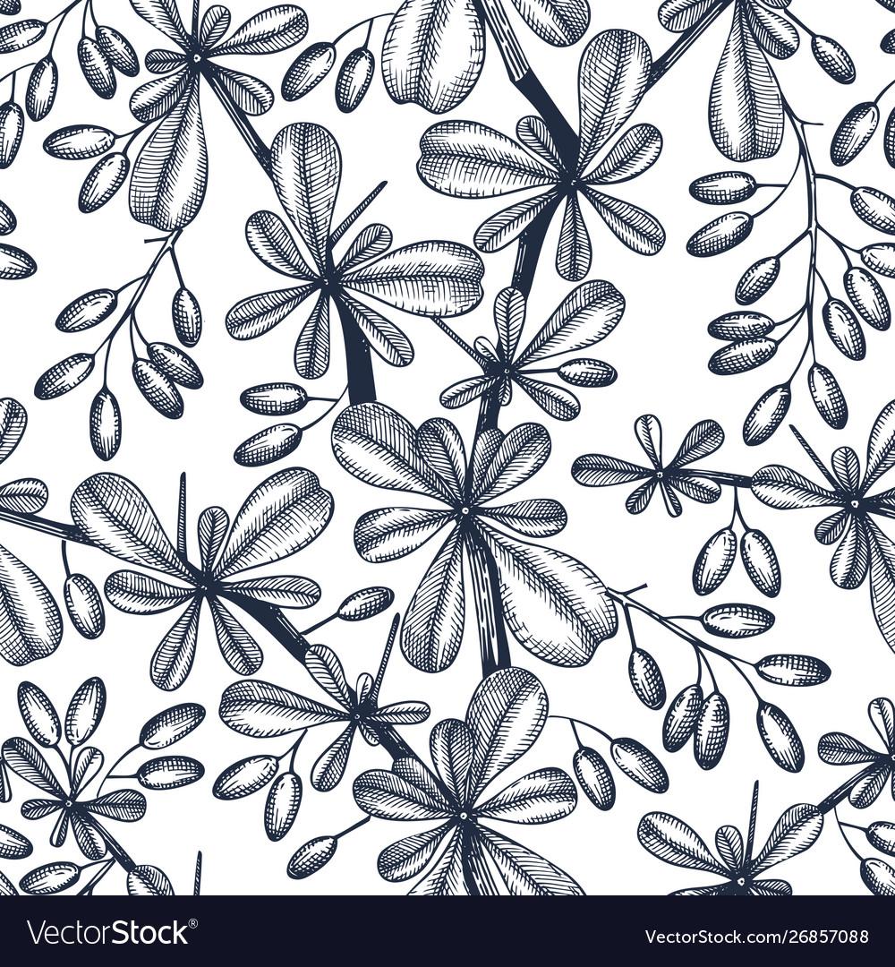 Berberis seamless pattern evergreen tree