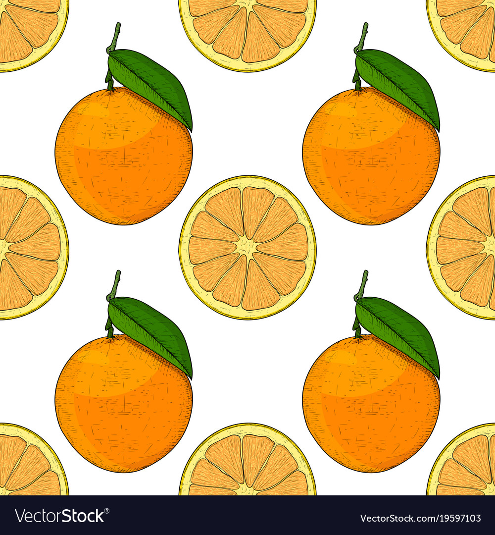 Orange whole and slice hand drawn colored sketch