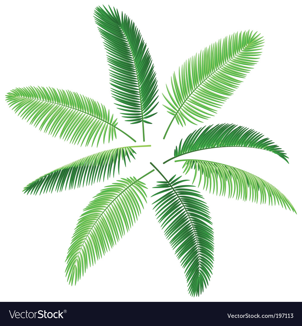 Set of palm leaves