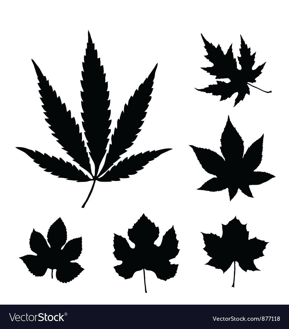 Leaf silhouette set