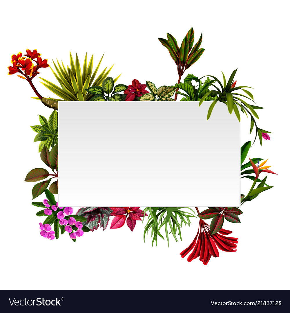 Frame botanical nature with the flowers accents