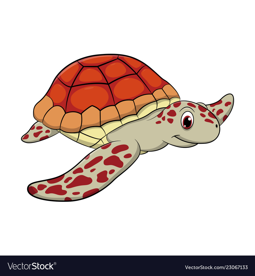 Turtle Cartoon Drawing Royalty Free Vector Image