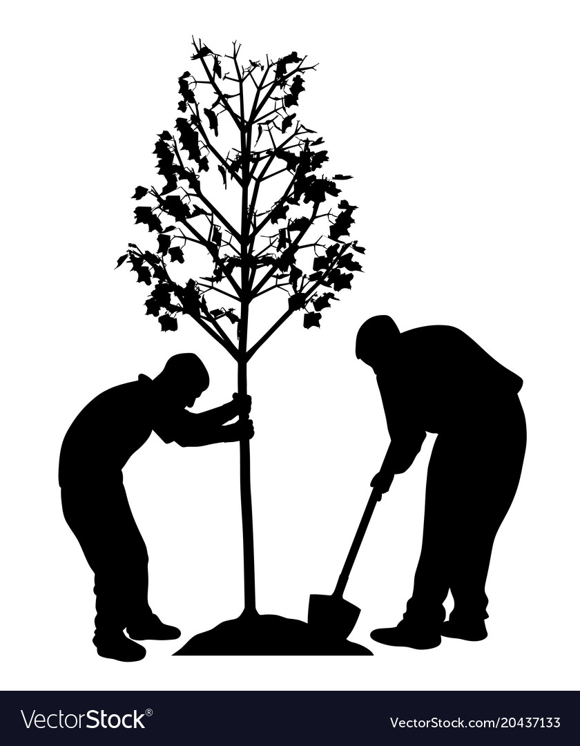 Two men planting a tree Royalty Free Vector Image