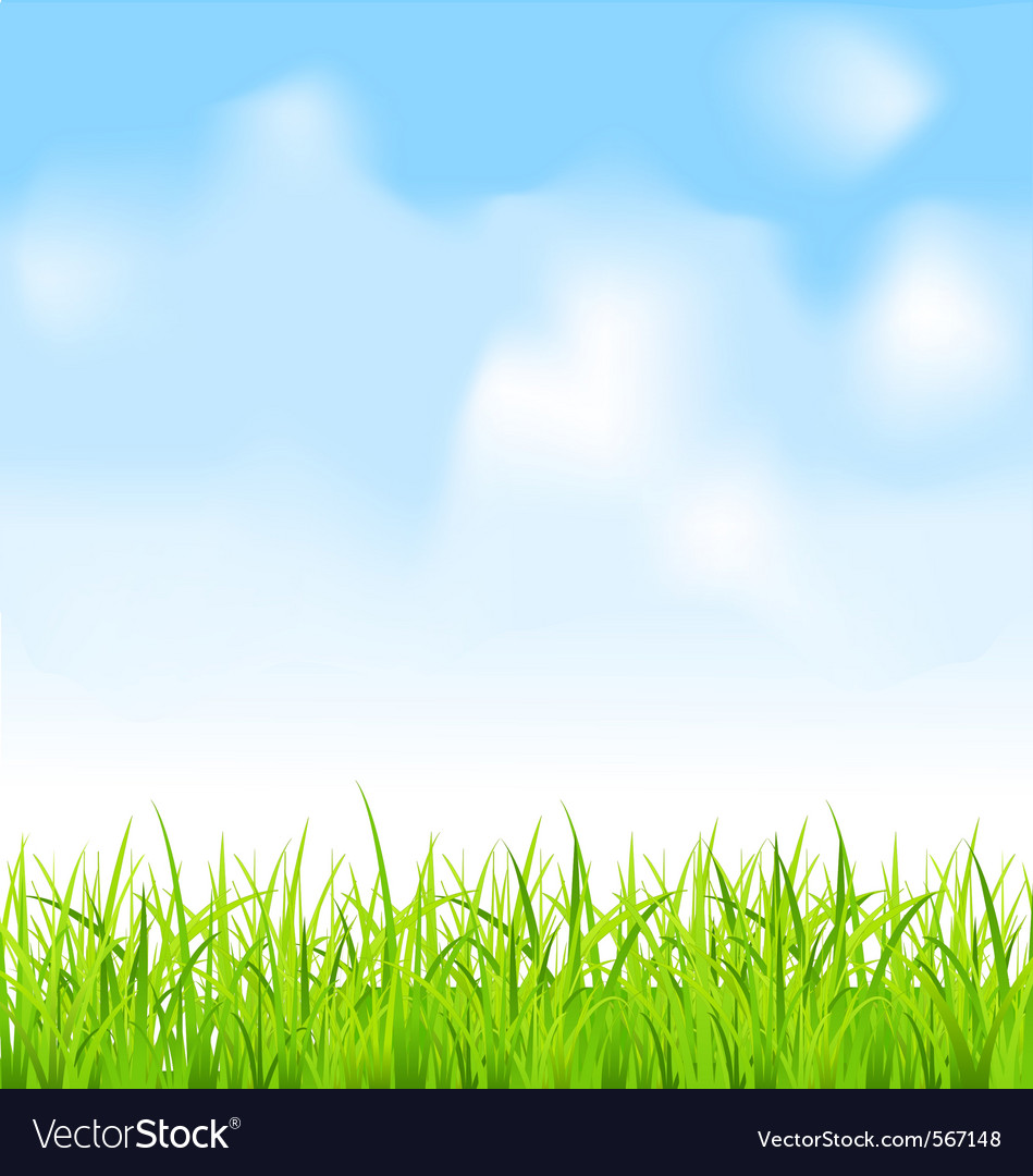 green grass and blue sky royalty free vector image