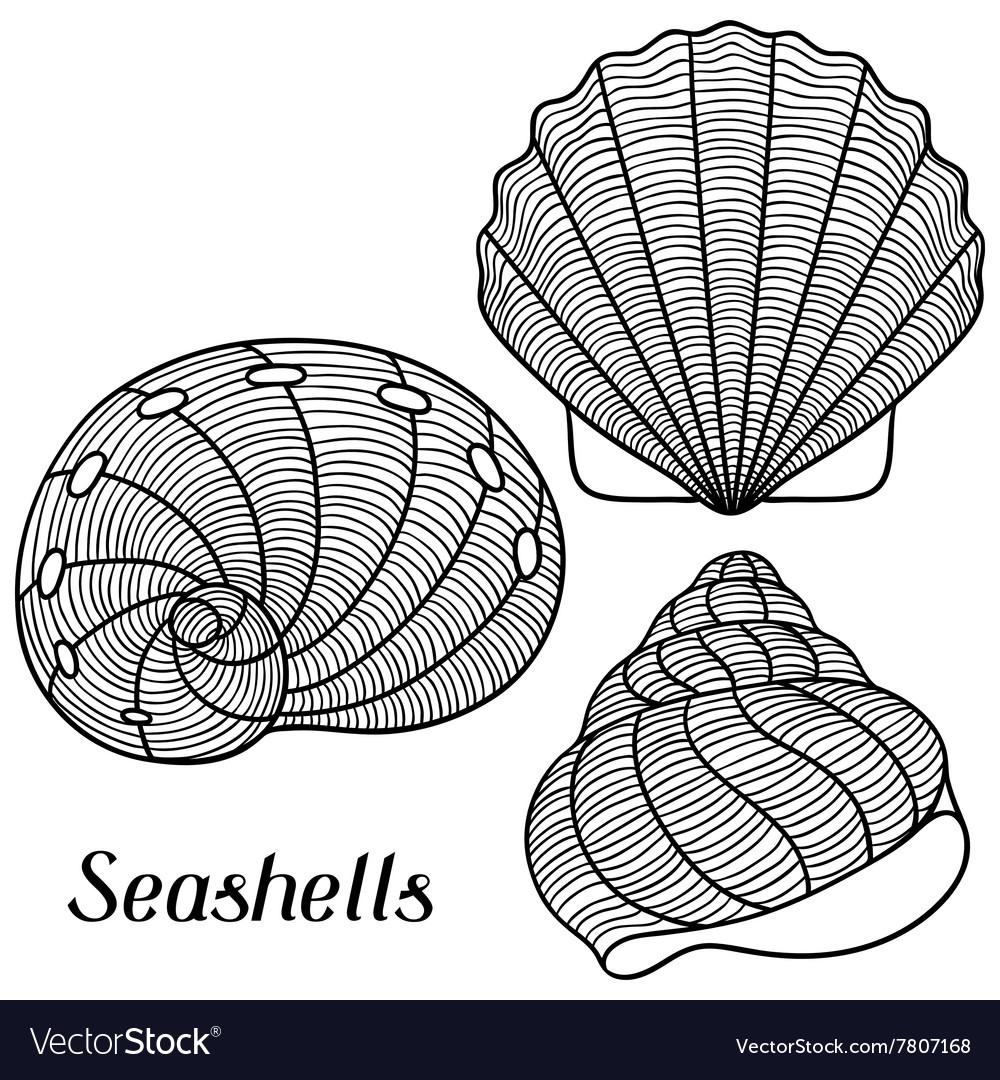Set of stylized seashells Objects for decoration