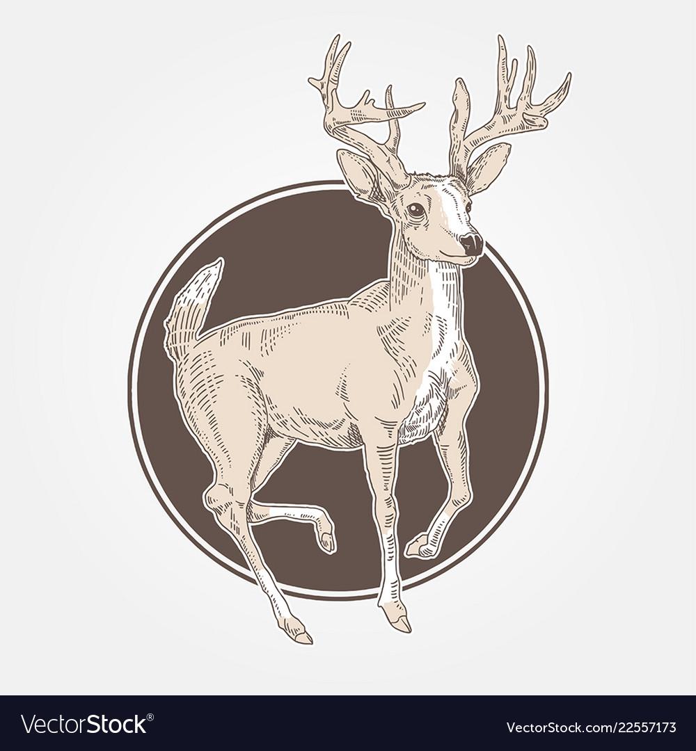 Deer vintage engraved