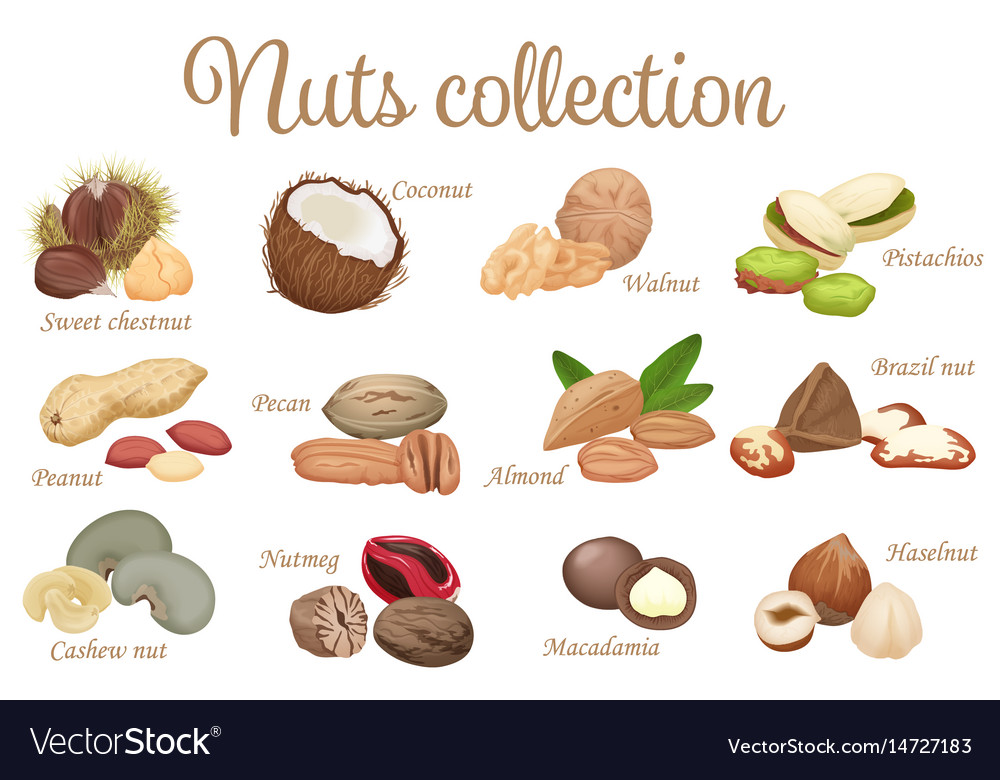 Collection mix of different types nuts