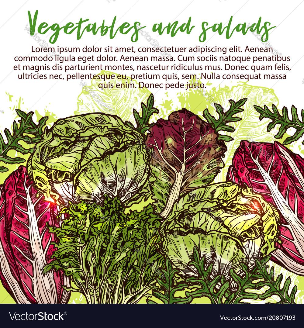 Sketch poster of salads vegetables