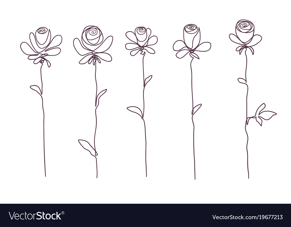 Roses collection of isolated rose flower sketch