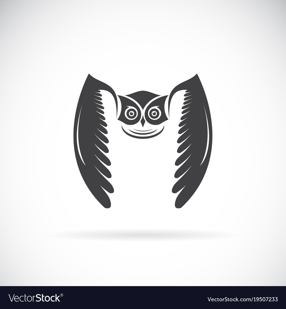 Owl Design On White Background Bird Wild Vector Image