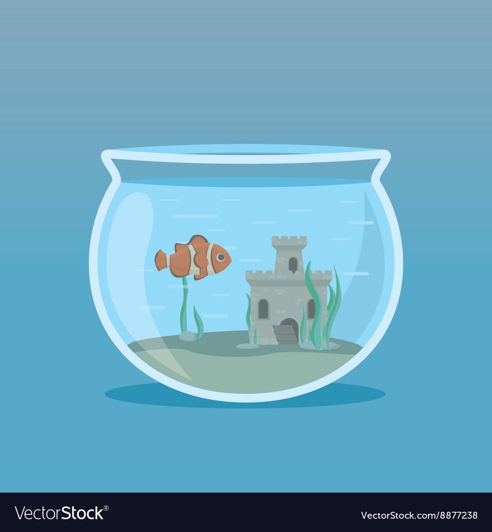 Clown Fish in an aquarium with algae and castles