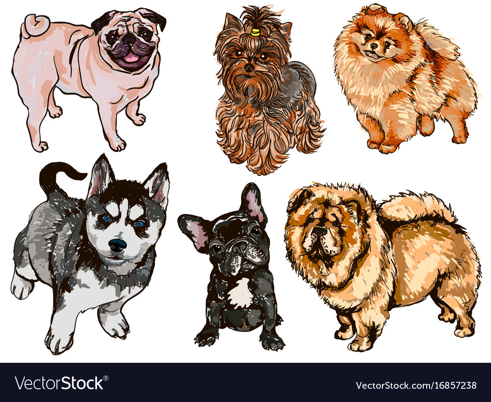 Colorful set of of dogs of different