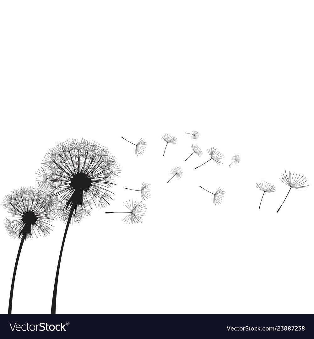 Dandelion time two dandelions blowing in the wind Vector Image