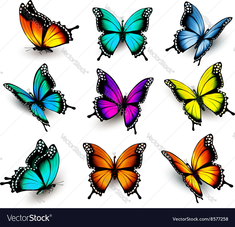 Collection of colorful butterflies flying in