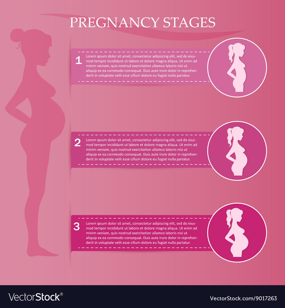 Pregnant woman - first second and third trimester