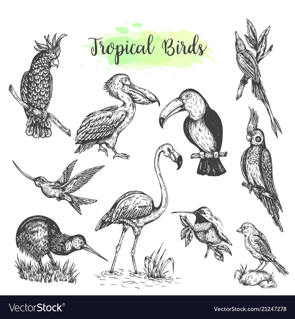 Exotic tropical birds hand drawn parrot
