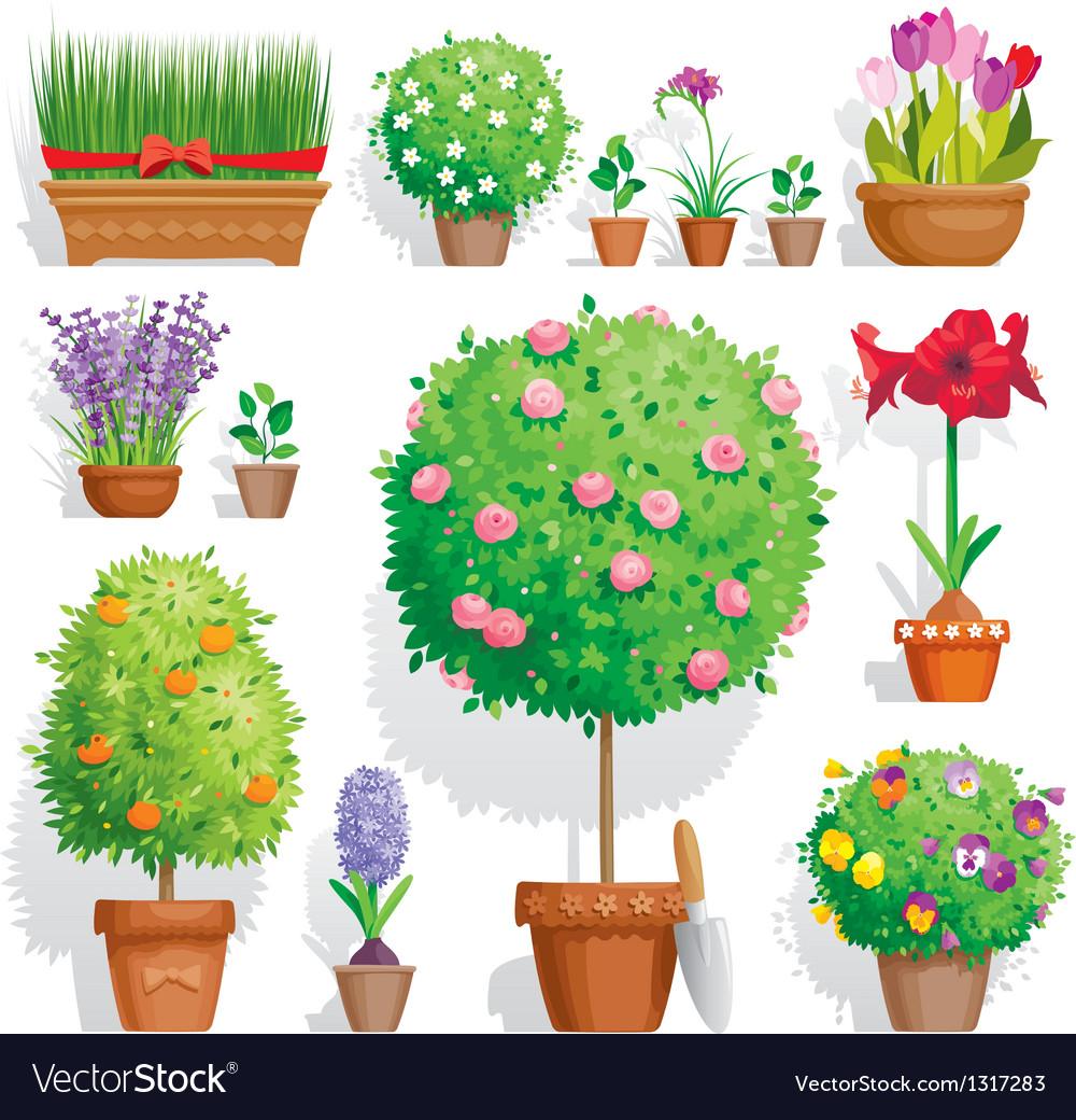 Pot plants set