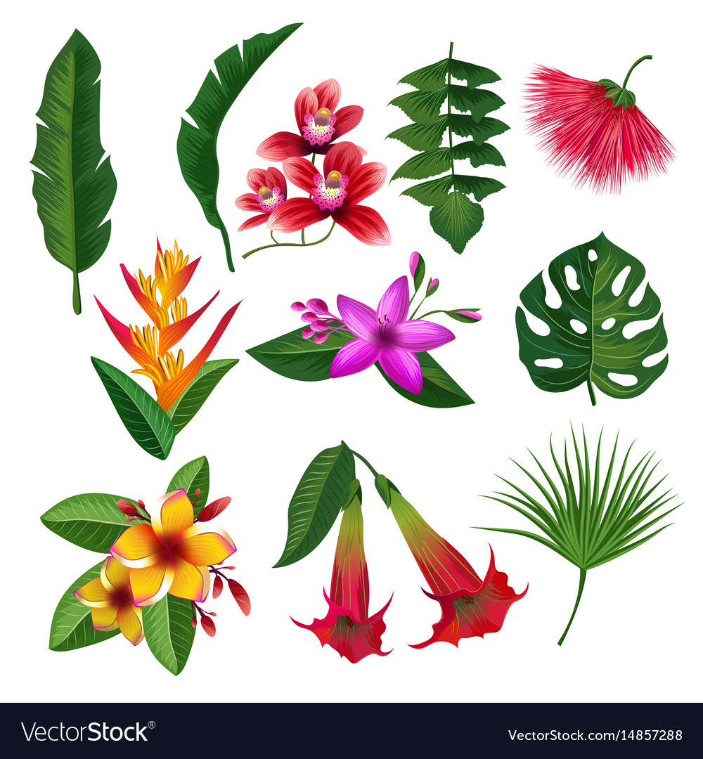 Tropical plants hawaii flowers leaves and branches tropical plants hawaii flowers leaves and branches vector image izmirmasajfo
