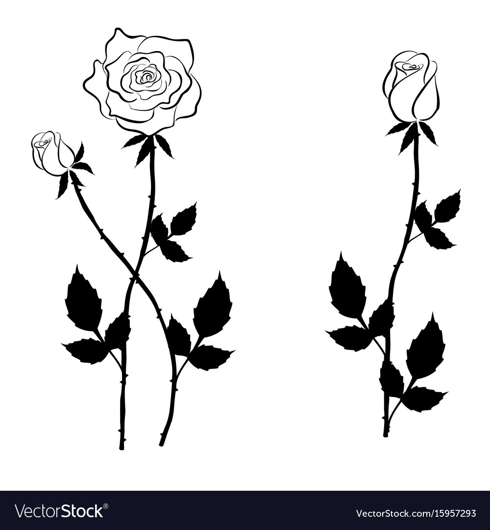 Black Rose And Buds In Graphic Style Royalty Free Vector