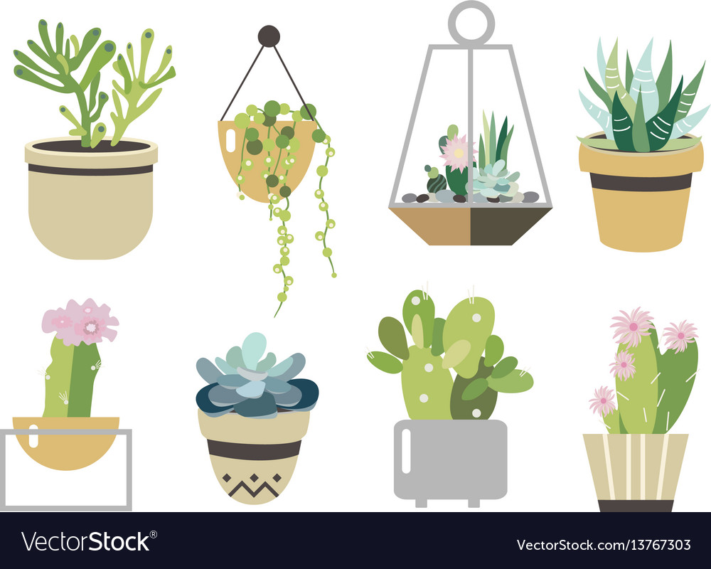 Succulent and cactus set collection in flat style