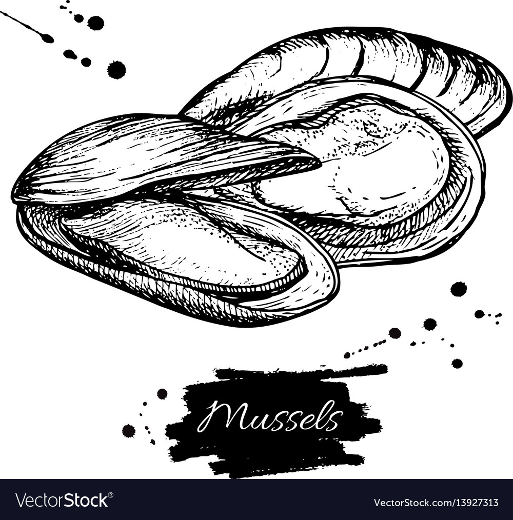 Mussel hand drawn engraved