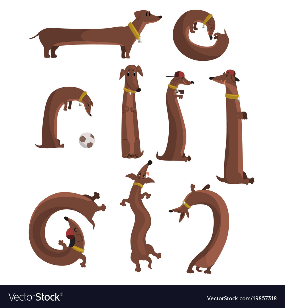 Dachshund dog set cute funny long dog in