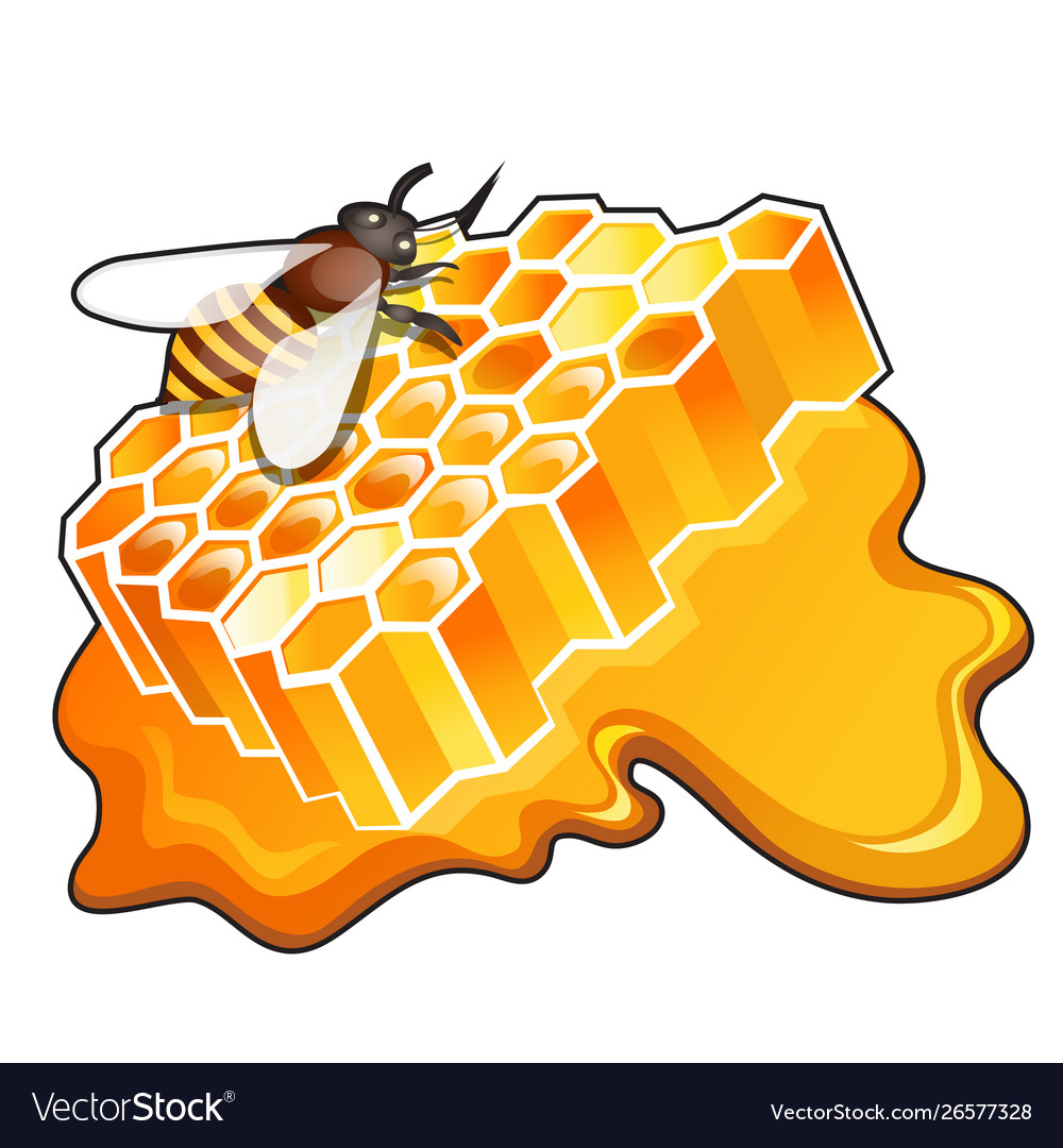 Sweet golden honeycomb with puddle honey