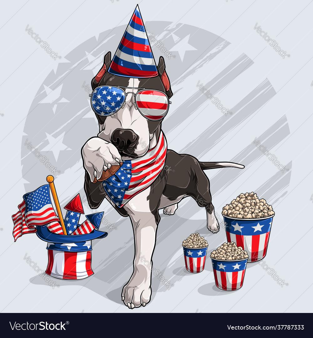 Cute black pitbull dog 4th july elements
