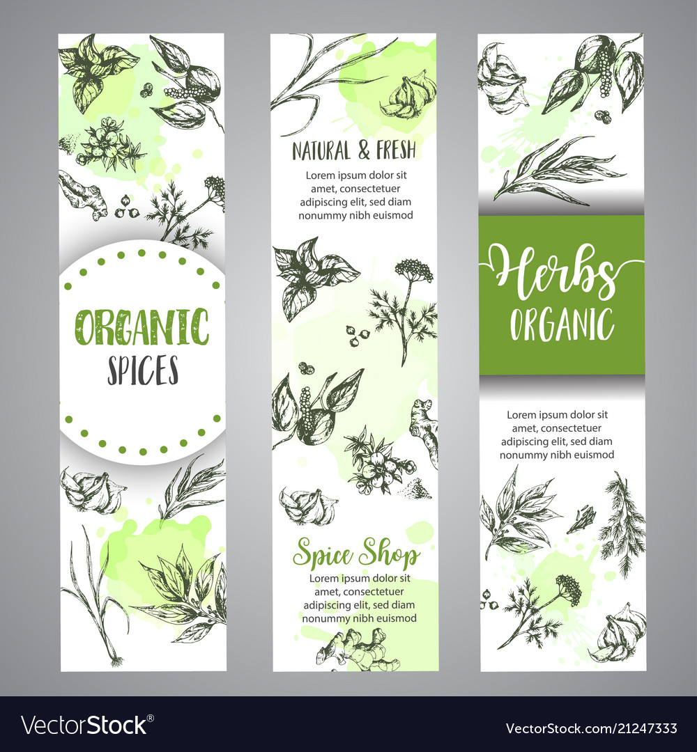 Herbs and spices vertical banners herb plant