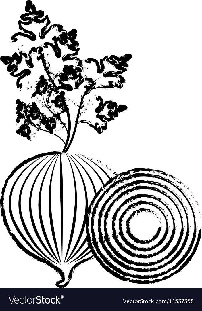 Edge fresh onion and slice plant organ food